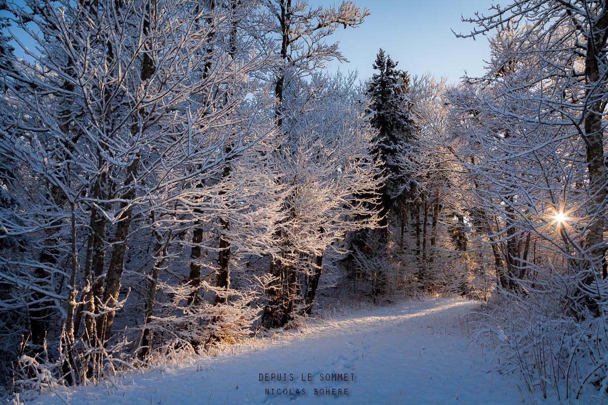 Début de journée glacée dans la forêt de Lente